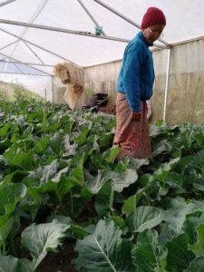 Die Frauen bauten auch neue Gemüsesorten an - Foto: AMURT